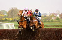 Shropshire - two racehorses at eyton upon severn point to point